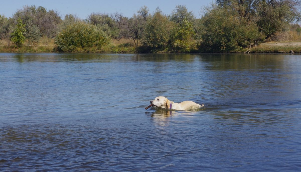 Vignette-chien-baignade-1200x686-1.jpg