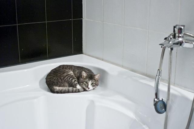 cat-1052060_640-1.jpg